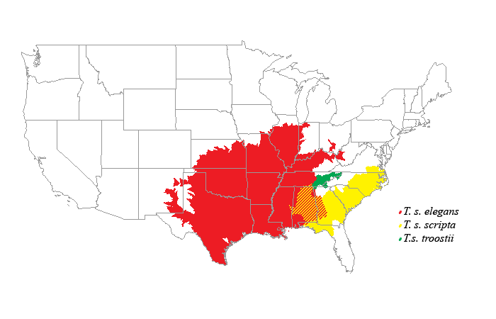 Tracheymys scripta range (© Wikipedia.org)