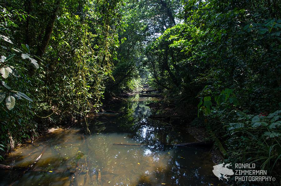 River in Gunung Mulu