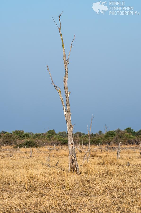 ZambiaSouthLuangwa20150804-15