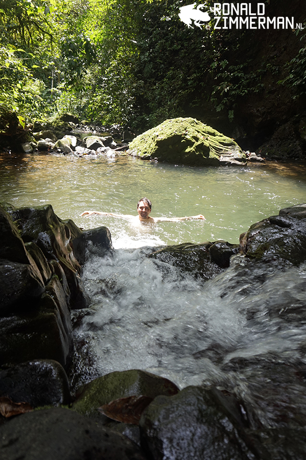 Swimming in the Guayacán Rainforest Reserve